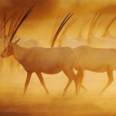 استكشفوا الحياة البرية على جزيرة صير بني ياس