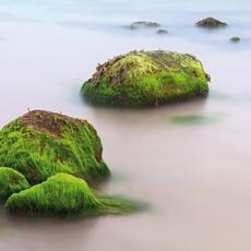 الطحالب والبشرة أصدقاء