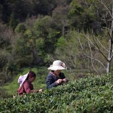 كيف يعزّز الشاي طاقتك الإبداعيّة؟