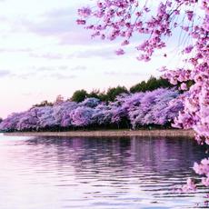 رحلة عبر القارّات إلى وجهات تلبس الحلّة الزهريّة 
