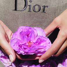 كيف يجري الحصاد في حقول Dior؟